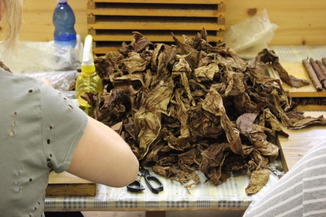 Le sigaraie al lavoro nella manifattura di Campese