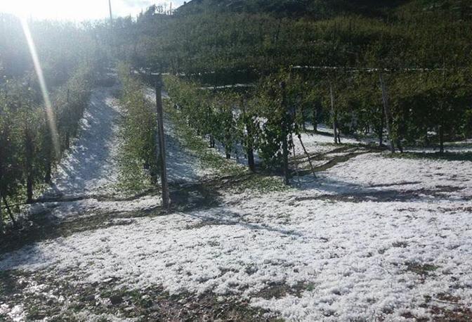 Vigneti imbiancati da un manto di ghiaccio, talmente fitti erano i chicchi di grandine caduti sui terreni di Farra di Soligo, Valdobbiadene, Follina, l'area vocata alla Docg del Prosecco (Coldiretti)